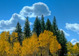 Aspen-along-the-Peak-to-Peak-Scenic-Byway.JPG