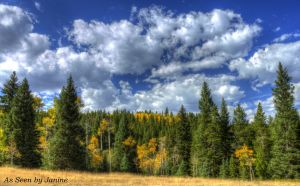 Fall Foliage along the Peak to Peak Scenic Byway Near Estes Park Colorado