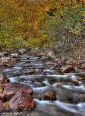 Gently Down the Stream Fall Foliage Surrounding Flowing Creek