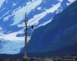 Guardian of the Glaciers Bald Eagle on Bare Tree Viewed from Kayak in Prince William Sound Alaska